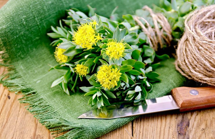 Rhodiola Benefits to Menopause Age Women
